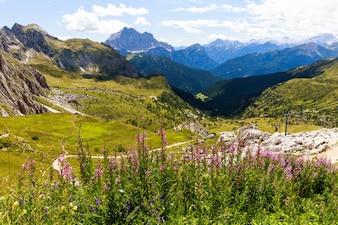 Campos verdes e flores nos Alpes Dolomitas