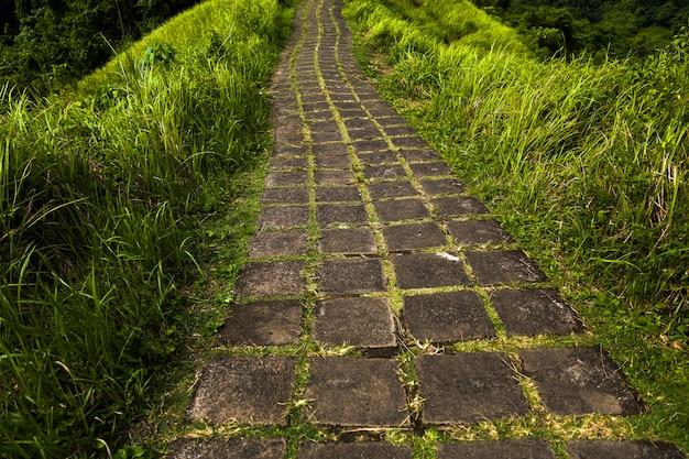 Campuhan ridge pista de caminhada em ubud, bali