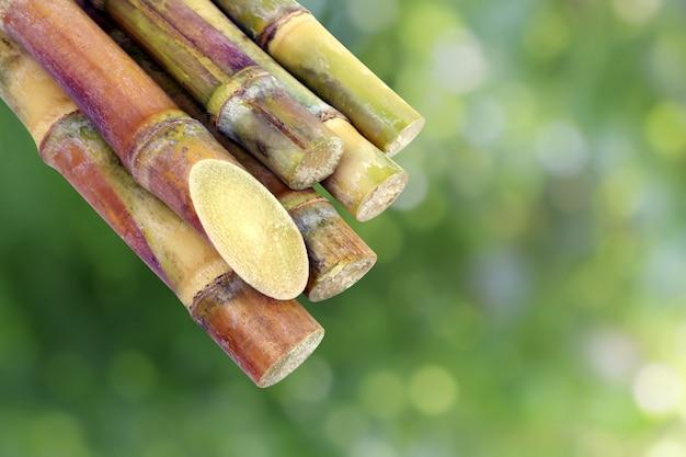 Cana de açúcar, cana, pedaço de cana de açúcar fresco, cana de açúcar
