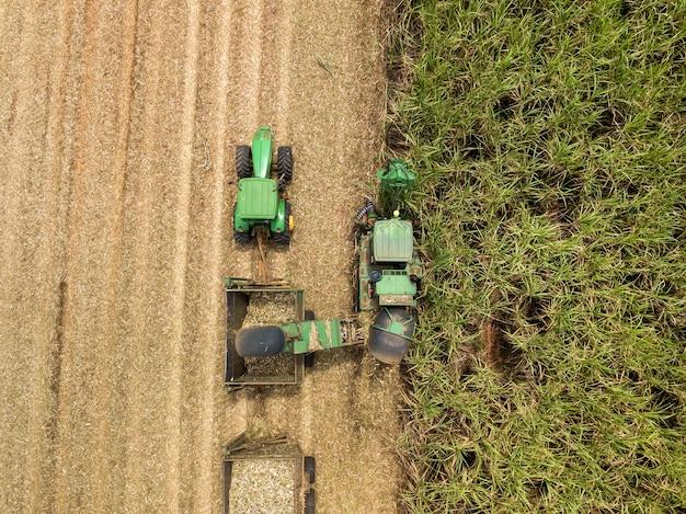 Cana-de-açúcar - máquina colhedora trabalhando em uma plantação de cana-de-açúcar.