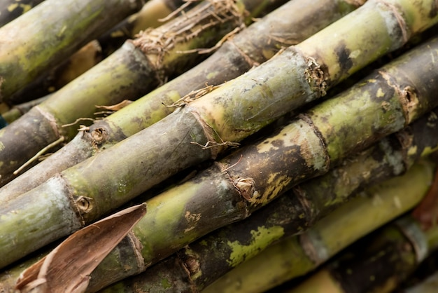 Cana-de-açúcar ou saccharum officinarum no fundo da natureza.