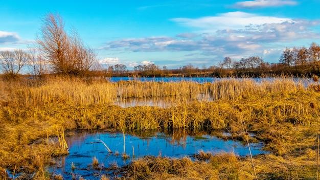 Cana-de-mato no rio em clima ensolarado no início da primavera