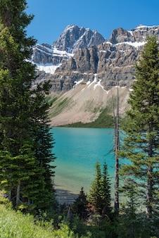 Canadá, floresta, paisagem, com, grande, montanha, em, a, fundo, alberta