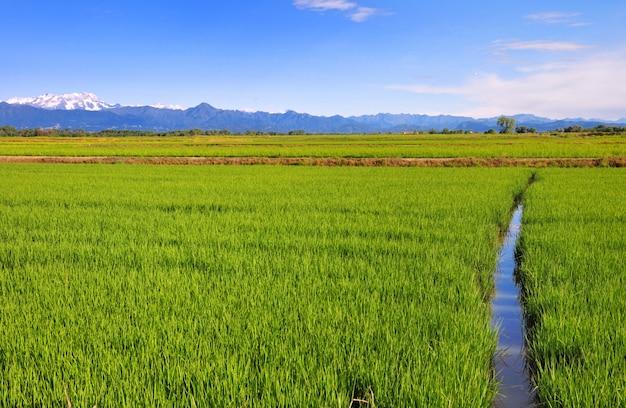 Canal atravessando um campo verde de arroz com fundo de montanha
