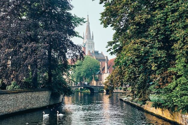 Canal de bruges com cisnes brancos entre árvores centenárias, com a igreja de nossa senhora ao fundo, brugge bel ...