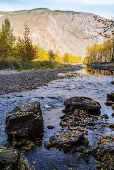 Canal sombrio do rio da montanha no desfiladeiro de outono rússia altai ulagansky distrito chulyshman river