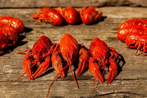 Câncer para cerveja, endro, lagostim cozido, petiscos de cerveja, pub, textura, lagostim, lagostim do mar