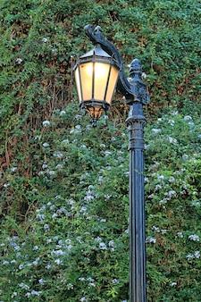 Candeeiro de rua à moda antiga com arbustos floridos de plumbago azul no fundo
