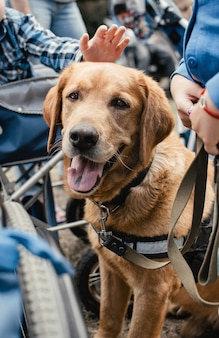 Canis dog therapy. cão labrador e crianças deficientes na grama verde