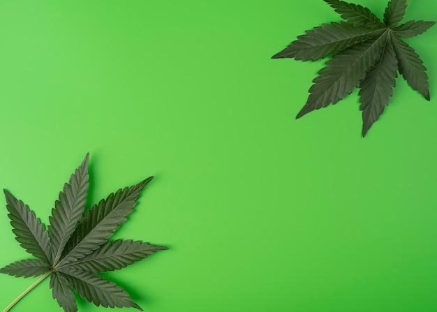 Cannabis deixa planta de maconha isolada em fundo verde conceito de legalização de recreação de cânhamo