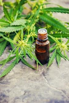Cannabis erva e folhas para o caldo de tratamento, tintura, extrato, óleo. foco seletivo.