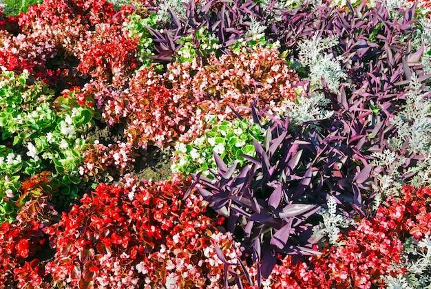 Canteiro de flores colorido em flor no parque da cidade de verão