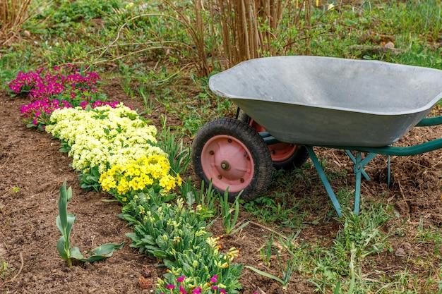 Canteiro de flores com flores e carrinho de mão de equipamento de jardineiro carrinho de mão no jardim no dia de verão. ferramentas de trabalhador agrícola prontas para o plantio de mudas ou flores. conceito de jardinagem e agricultura.