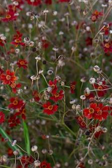 Canteiro de flores com pequenas flores de petúnia vermelhas, brancas e rosa em plena floração. pode ser usado como plano de fundo.
