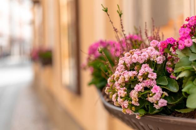 Canteiro de flores na janela. a atmosfera da velha praga.