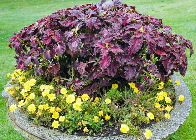 Canteiros de flores coloridos florescendo no parque da cidade no outono