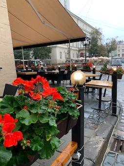 Canteiros de flores com flores vermelhas depois da chuva ouçam o café da rua