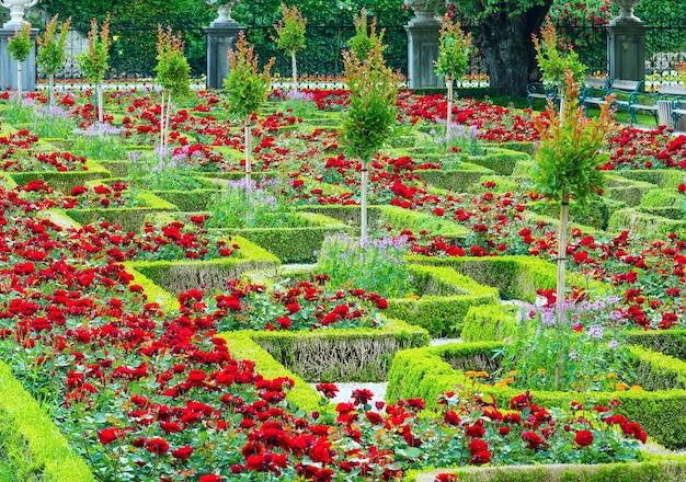 Canteiros de flores de rosas em flor no parque da cidade de verão