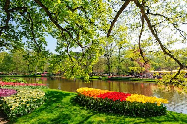 Canteiros de flores dos jardins de keukenhof em lisse, holanda