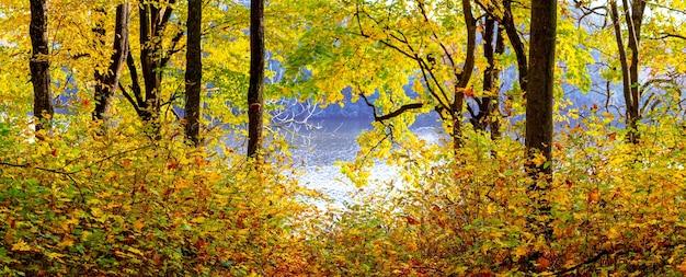 Canto pitoresco da floresta de outono à beira do rio. outono dourado na floresta