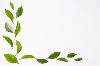 Canto simples com folhas no fundo branco