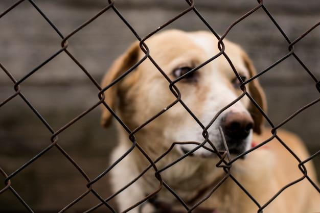 Cão abandonado abusado no exílio