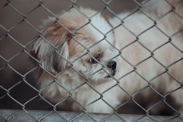 Cão abandonado trancado em uma gaiola