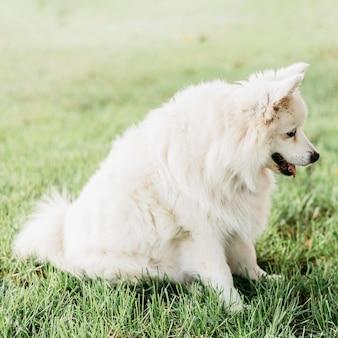 Cão adorável à espera de guloseimas