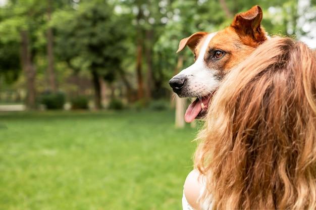 Cão adorável, aproveitando o tempo com seu dono