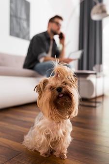 Cão adorável com dono atrás