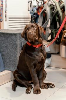 Cão adorável com dono na pet shop