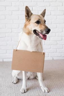 Cão adorável com faixa de papelão