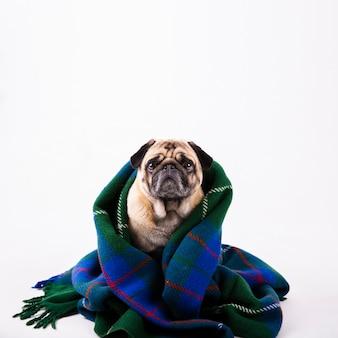 Cão adorável cópia-espaço coberto com manta azul