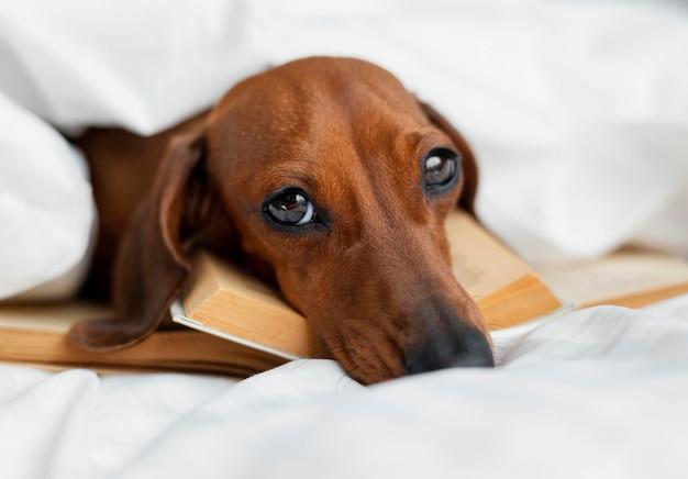 Cão adorável deitado sobre livros