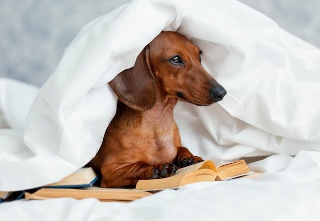 Cão adorável na cama com livros
