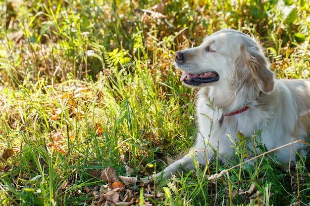Cão adorável na grama