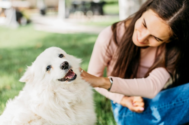 Cão adorável sendo acariciado pelo dono