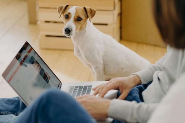 Cão adorável senta-se, olha diretamente para a câmera