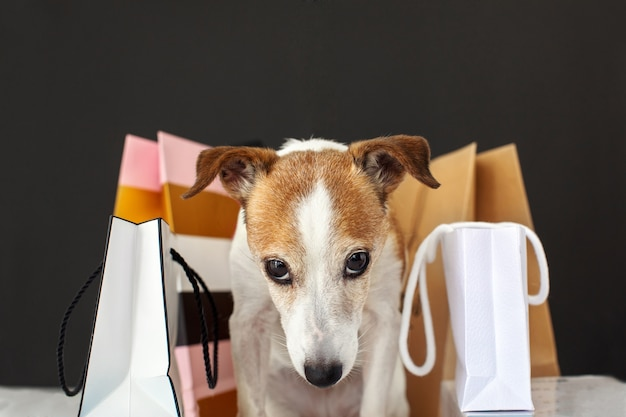 Cão adorável sentado perto de sacos de papel com mercadorias após as compras contra um fundo preto