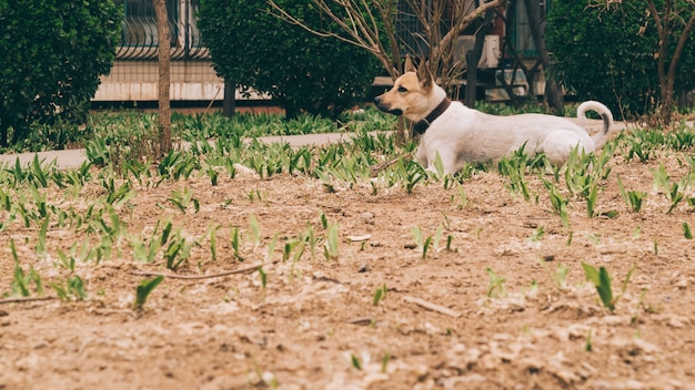Cão adulto andando perto da casa