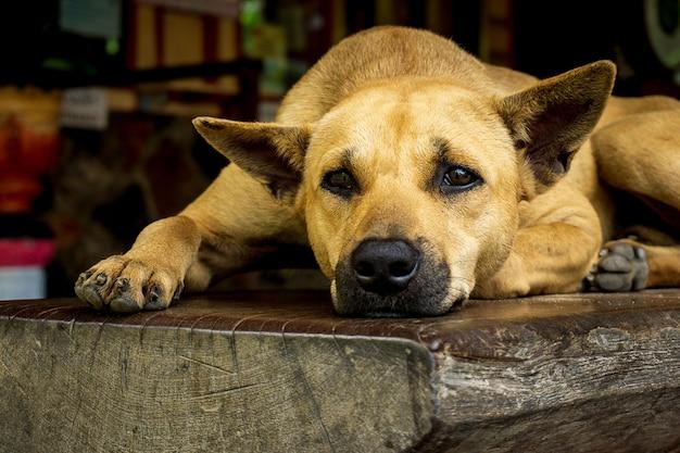 Cão agachado no banco