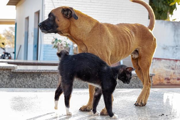 Cão amarelo abandonado e gato preto interagindo amigavelmente