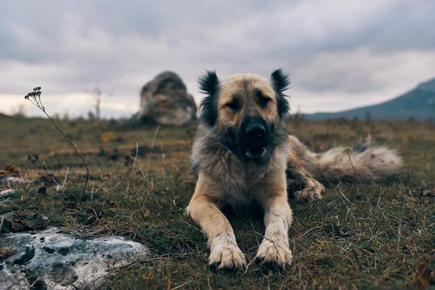 Cão ao ar livre nas montanhas encontra-se na grama, descanso, amizade, viagem