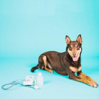 Cão ao lado de equipamentos veterinários