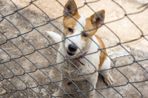 Cão atrás da cerca de ferro