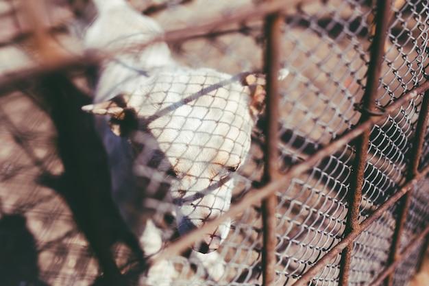 Cão atrás de uma cerca