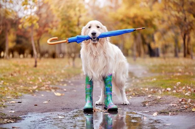 Cão bonito andando com guarda-chuva nos dentes