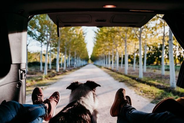 Cão bonito border collie e duas pernas de mulher relaxando em uma van. conceito de viagens.