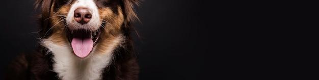 Cão bonito close-up com espaço de cópia