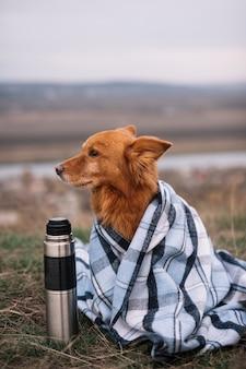 Cão bonito coberto com manta